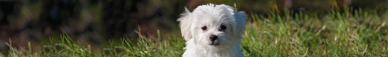 fb67c0e616ff7 Adopt a Dog   Animal Welfare League NSW