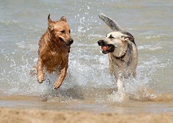 Australia Day Pet Safety Tips