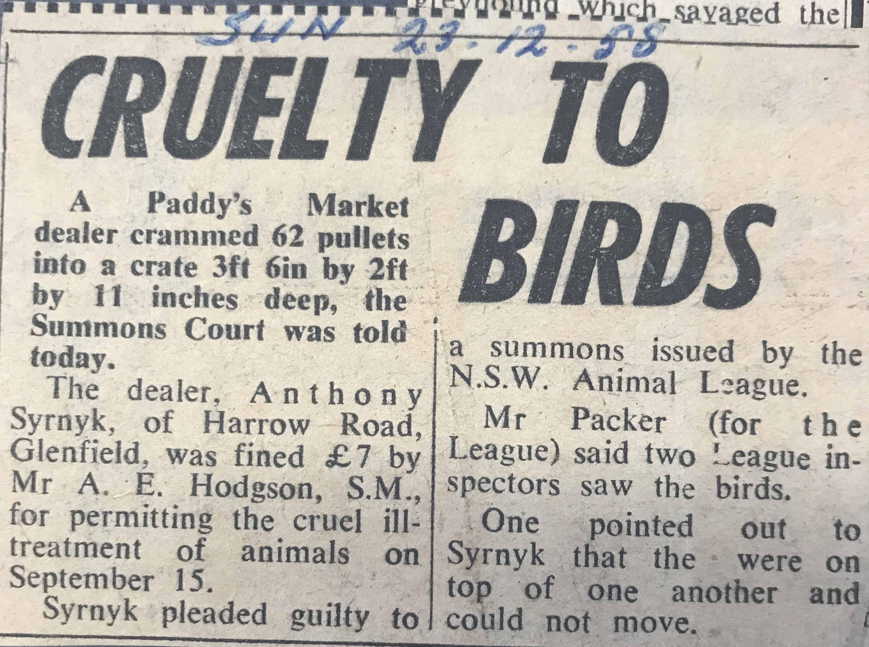 News article on Paddy's market bird proseuction