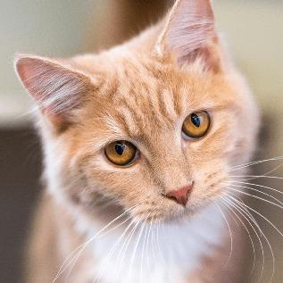 Meet Rufus