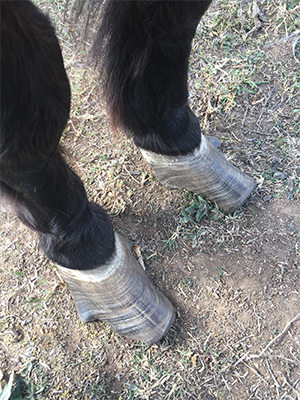 Gerald the Pony Condition