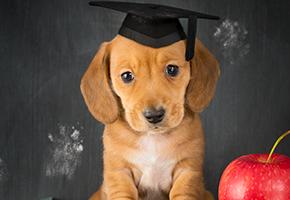 AWL NSW Puppy Preschool