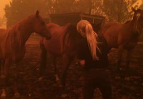 NSW Bushfire Crisis