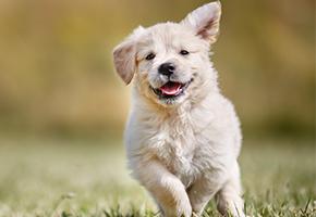 PETstock Adoption Day