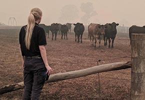 NSW Bushfire Recovery