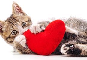 Adopt LOVE this Valentine's Day