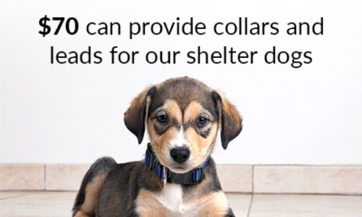 Dog with $70 can provide collars and leads text overlay