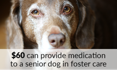 $60 can provide medication to a senior dog in foster care