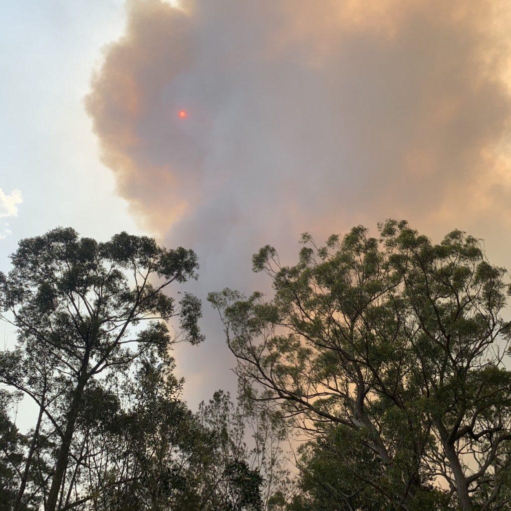 smoke plumes rising above trees