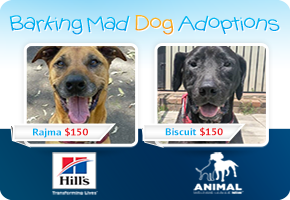 Adopt a dog for just $150